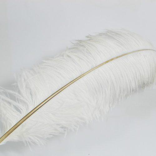 Witte struisvogelveer
