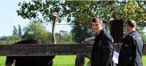 Struisvogelboerderij bezoeken