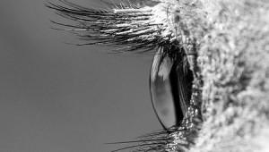 Struisvogeloog