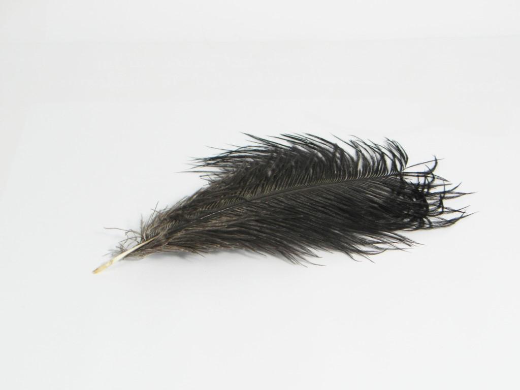 Zwarte struisvogelveer