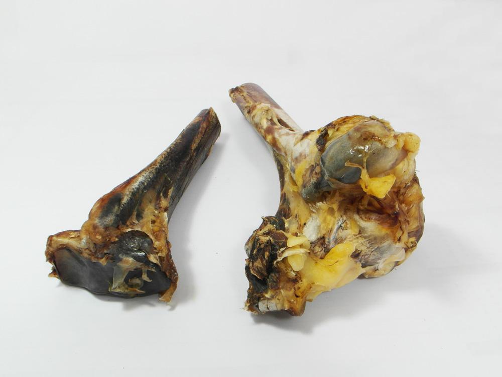Struisvogelbot (Tibia-onder) - Hondenvoeding