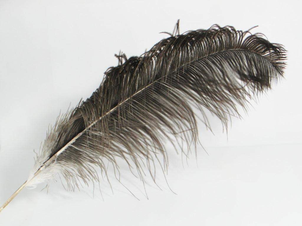 Bruin-grijze struisvogelveer